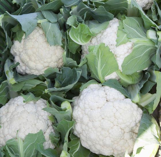 Odmiany kalafiora - na świeży rynek